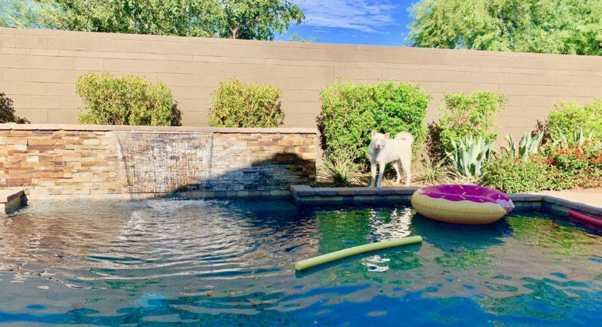 Pool Labor Day Dog