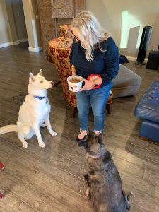 Dogs enjoying Trader Joe's Dog Treats